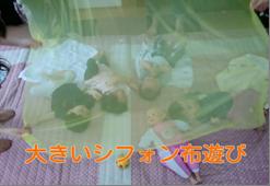 シフォン赤ちゃん